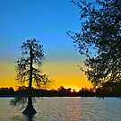 Egrets and Cypress in Silhouette by Mike Capone