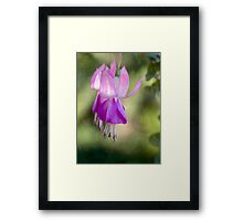 Dancing in the light on New Year's morning 2012 Framed Print