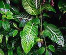 Rainforest foilage  by PJS15204