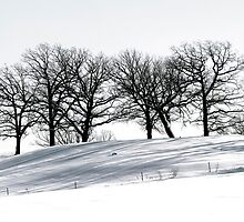 Stark Winter's Day by KBritt