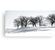 Stark Winter's Day Canvas Print