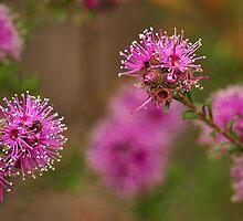 Australian Flora by Barbara Burkhardt
