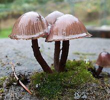 Shiny little bites by Rainydayphotos