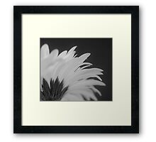 Gerbera in Black and White Framed Print