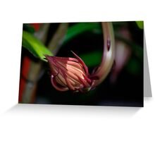 Queen of the night bud. Greeting Card