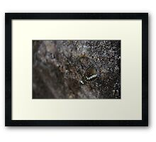 Butterfly Survival Framed Print