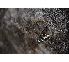 Butterfly Survival Photographic Print