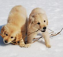 Puppies in Winter by Laurie Minor