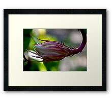 Queen of the night #2 Framed Print