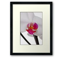 White Phaleanopsis Orchid on white background Framed Print