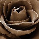 Sepia Rose by Maddy Storm