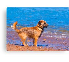 Dog Wall Art, Border Terrier Dog Canvas Print