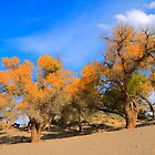 Golden yellow poplar trees by ArtPhotographer