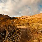 Up The Dunes by John Hare