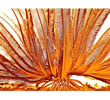 THE EVOLUTION LILY Photographic Print