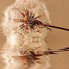 Dandelion refections by Joyce Knorz