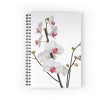 White Phaleanopsis Orchid on white background Spiral Notebook
