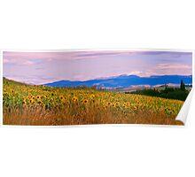 Sunflower Panorama Poster