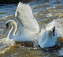Stop Splashing Me! by Susie Peek