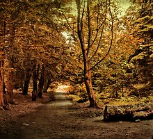 An Autumn Walk  by Irene  Burdell