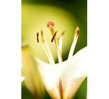 Proud Lily III Photographic Print