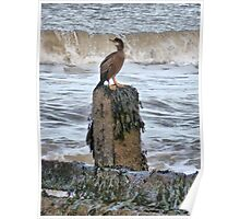 When is a Cormorant not a Cormorant ????. Poster
