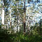 Amongst The Gum Trees by peterthompson