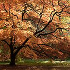 Magnificent Autumn by Anne Gilbert