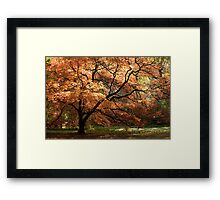Magnificent Autumn Framed Print