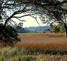 Marsh View at Kiawah Island by Rosanne Jordan