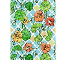 Climbing Nasturtiums on Blue and White Photographic Print