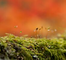 The Miniature World of Moss  by Anne Gilbert