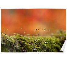 The Miniature World of Moss  Poster