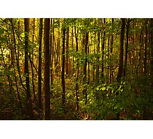Woodland Photographic Print