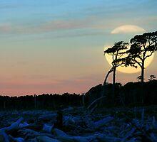 moonshine.bruce bay.sth westland.nz by rina  thompson