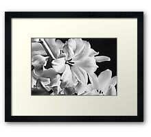 New Years Bloom Framed Print