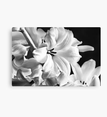 New Years Bloom Canvas Print