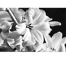 New Years Bloom Photographic Print