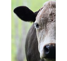 Moo Photographic Print
