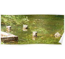 pond logs Poster