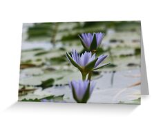 Purple Water Lilies at Rocky Creek Greeting Card