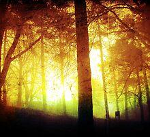 Sunrise Forest by Glen Davidson