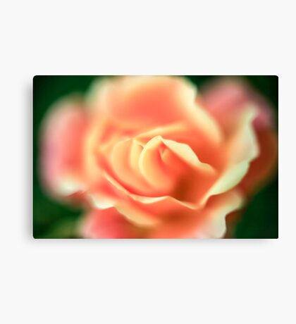 selective focus close up of a rose flower Canvas Print