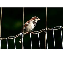 Like a Bird on a Wire Photographic Print