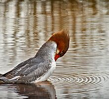 FEMALE COMMON MERGANSER by Sandy Stewart