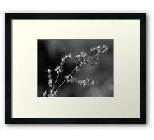 Softly Shining Framed Print