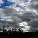 Dark Skies by Robin Black
