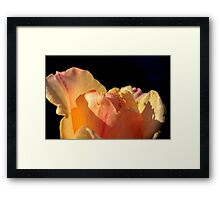 selective focus close up of a rose flower Framed Print