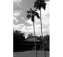 """The Barnacle"" Palms Photographic Print"