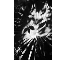 Palm Shadows Photographic Print